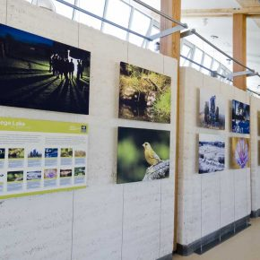 BBOWT visitor centre stretched canvas pictures on tension cable hanging system