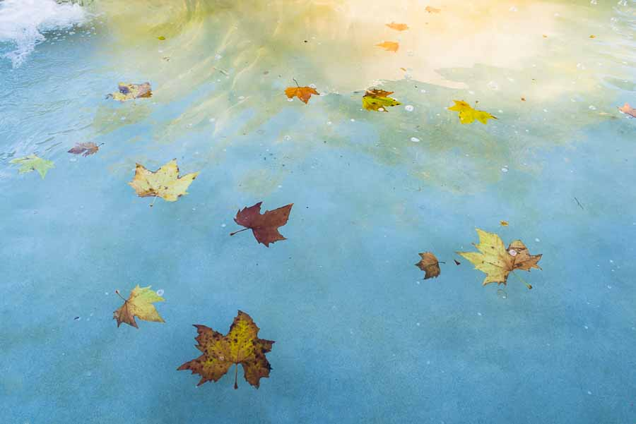 fallen leaves in fountain